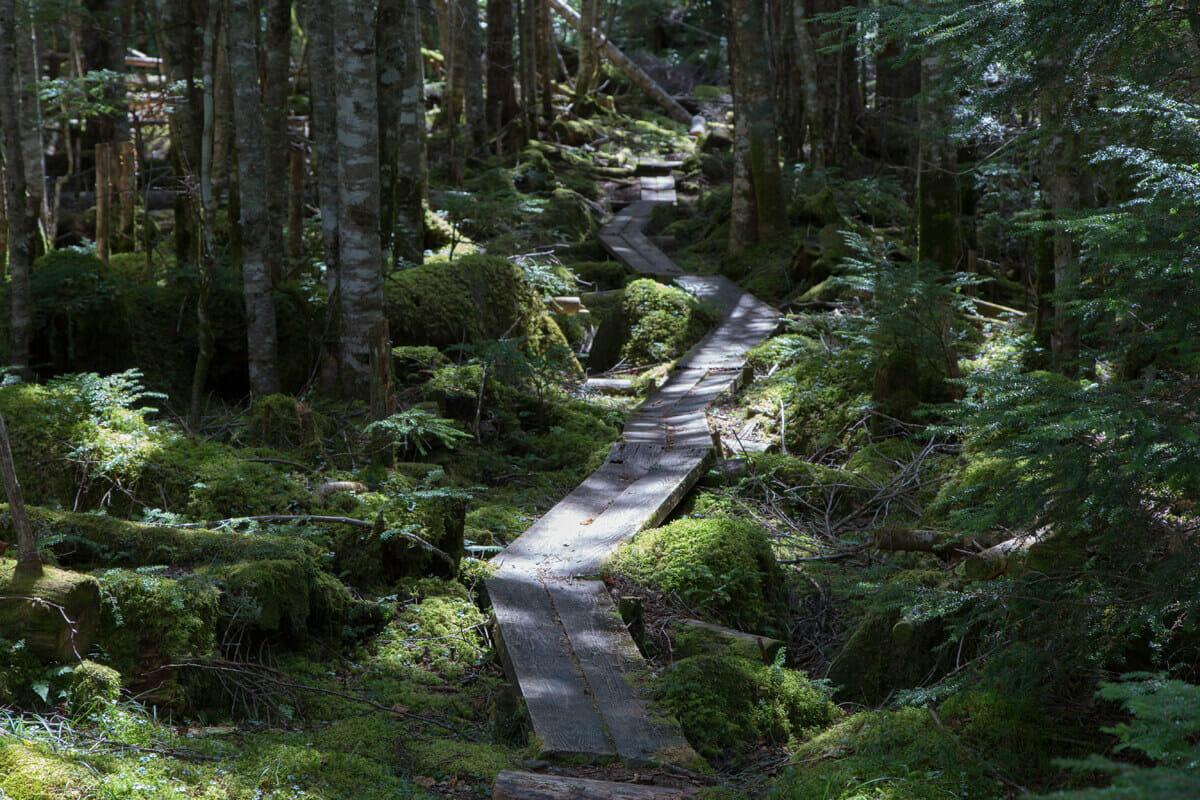 初秋の八ヶ岳で森歩き。